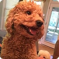 Adopt A Pet :: Coco - Ball Ground, GA