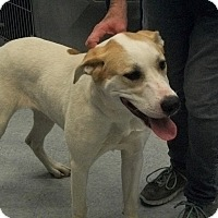 Adopt A Pet :: Maybel - Martinsville, IN