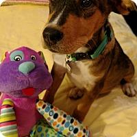 Adopt A Pet :: Bubba - Nashville, TN
