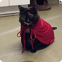 Adopt A Pet :: Miss Kitty;watch my video here - Manchester, NH