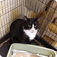Adopt A Pet :: Chip - Berlin, CT