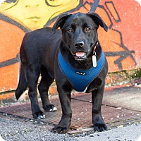Adopt A Pet :: Ed Harris - Jersey City, NJ