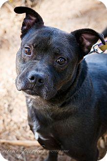 Boxer/Labrador Retriever Mix Dog for adoption in Marietta, Georgia - Zeke