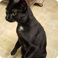 Adopt A Pet :: Daya - Cody, WY
