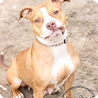 Adopt A Pet :: Lucy - Mt Vernon, NY