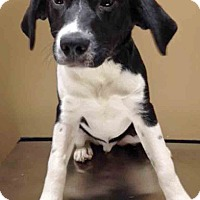Adopt A Pet :: Newman - Oswego, IL