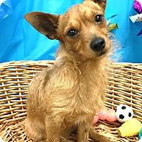 Adopt A Pet :: Jesse - Decatur, AL