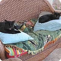 Adopt A Pet :: *Maresca2 - Winder, GA
