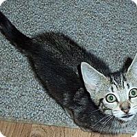 Adopt A Pet :: Theodore - Catasauqua, PA