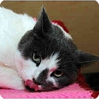 Adopt A Pet :: Smudge - Farmingdale, NY