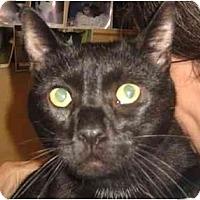 Adopt A Pet :: Jester - Jenkintown, PA