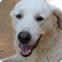 Adopt A Pet :: Moxie - Greenville, SC