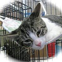 Adopt A Pet :: Maizie - Fort Wayne, IN