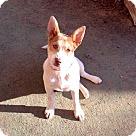 Adopt A Pet :: Rebecca