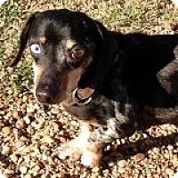 Adopt A Pet :: Bruce Bouquet - Houston, TX