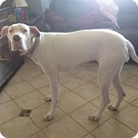 Adopt A Pet :: Darla - O'Fallon, MO