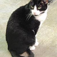 Adopt A Pet :: Ramses - Pineville, NC