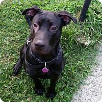 Adopt A Pet :: Phoenix--Pending Adoption - Lancaster, PA