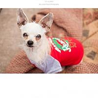 Adopt A Pet :: Chester - Edmond, OK