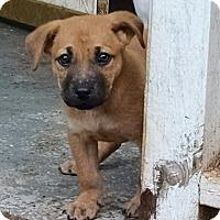 Adopt A Pet :: Vinny - Greensboro, GA