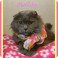 Adopt A Pet :: Matilda - Shippenville, PA