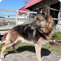 Adopt A Pet :: Zella - Tyler, TX