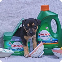 Adopt A Pet :: Cascade - Greensboro, NC
