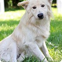 Adopt A Pet :: Arlington - Waldorf, MD
