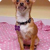 Adopt A Pet :: Thimble - 5 lbs - Dahlgren, VA
