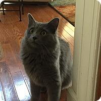 Adopt A Pet :: Willard- The Wonderful/Loving - Arlington, VA
