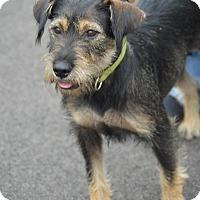 Adopt A Pet :: Sally - Cokato, MN