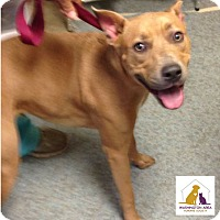Adopt A Pet :: Lucy - Eighty Four, PA