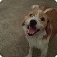 Adopt A Pet :: Brea - Hainesville, IL