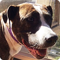 Adopt A Pet :: Wendy - Poway, CA