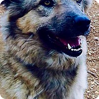 Adopt A Pet :: Faye - Toronto, ON