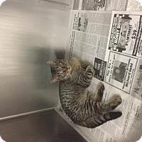 Adopt A Pet :: Oliver - Standish, MI