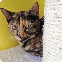 Adopt A Pet :: Locket - Fairfax, VA