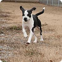 Adopt A Pet :: Titus - Huntsville, AL