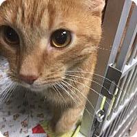 Adopt A Pet :: Tiny - Marion, OH