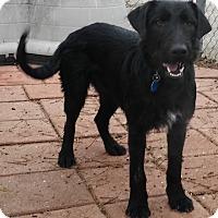 Adopt A Pet :: RAIN - Dallas, TX