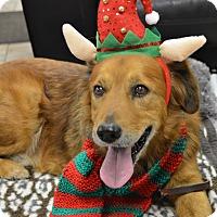 Adopt A Pet :: Rex - Pacific, MO