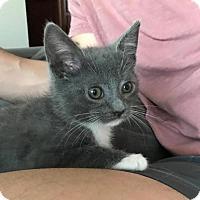 Adopt A Pet :: Bruce - Potomac, MD