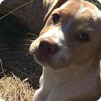 Adopt A Pet :: Skyster - Rowayton, CT