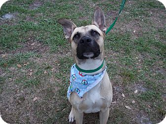 German Shepherd Dog Mix Dog for adoption in Tampa, Florida - Stan