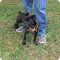 Adopt A Pet :: Kishi - Kingwood, TX