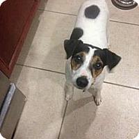 Adopt A Pet :: Hunter in Houston - Houston, TX