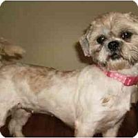 Adopt A Pet :: Anna Belle - Mooy, AL
