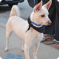 Adopt A Pet :: Foxy - Los Angeles, CA