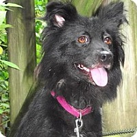 Adopt A Pet :: Little lady Cecilia -CeCe - Baltimore, MD