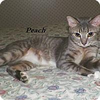 Adopt A Pet :: Peach - Dover, OH
